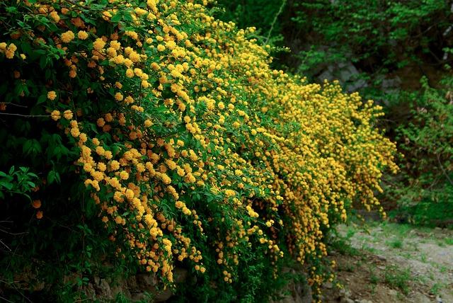 Leaf, Nature, Wood, Plants, Season, Spring, Die Hard