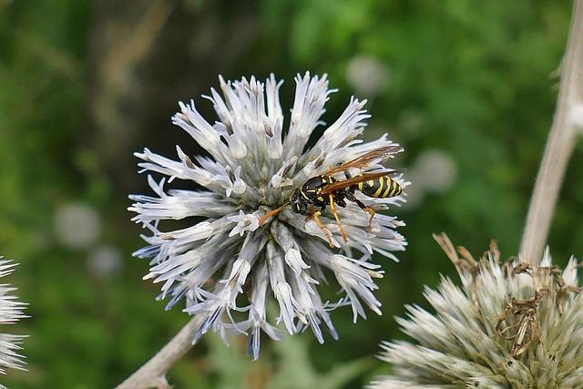 Diestel, Insect, Close Up, Macro, Original, Beautiful