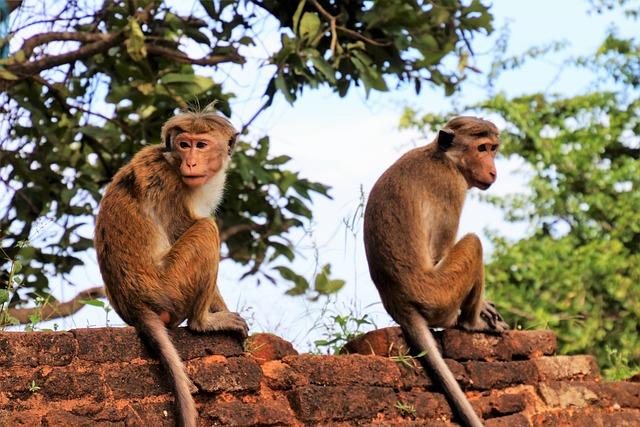 Para, Monkey, Primates, Nature, Different Monkeys