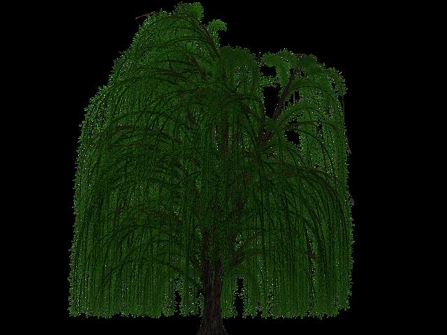 Tree, Deciduous Tree, Pasture, Digital Art, Isolated