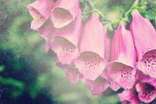Thimble, Digitalis, Flower, Plant, Blossom, Bloom