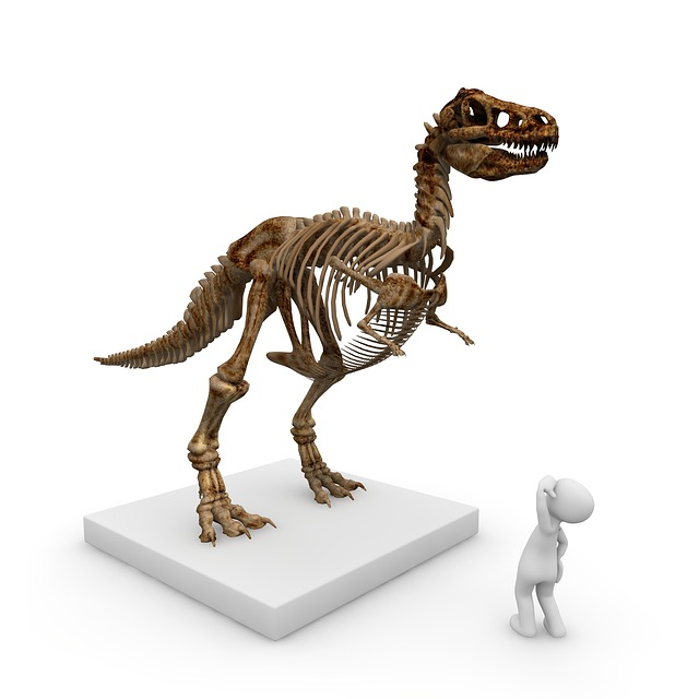 Museum, Dinosaur, T Rex, Tyrannosaurus Rex, Dino
