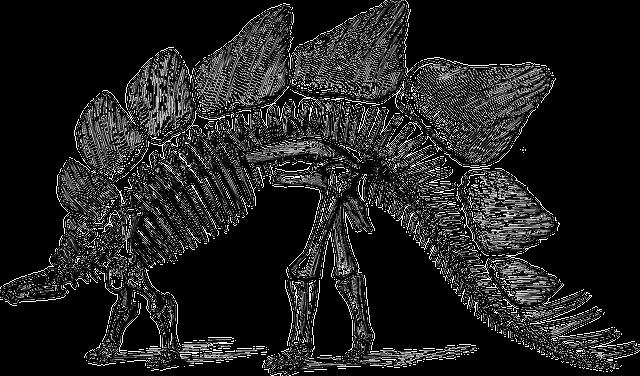 Dinosaur, Fossil, Paleontology, Skeleton