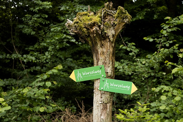 Directory, Hiking, Signs, Signposts, Arrow, Nature