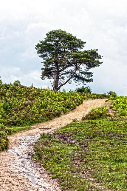 Track, Trail, Dirt Road, Sandy, Wet, Puddle, Tree