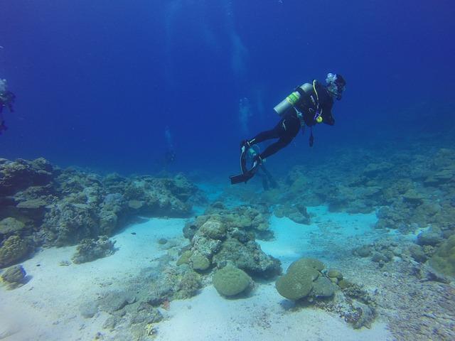Dive, Diver, Scuba, Palau, Scuba Diving, Scuba Diver