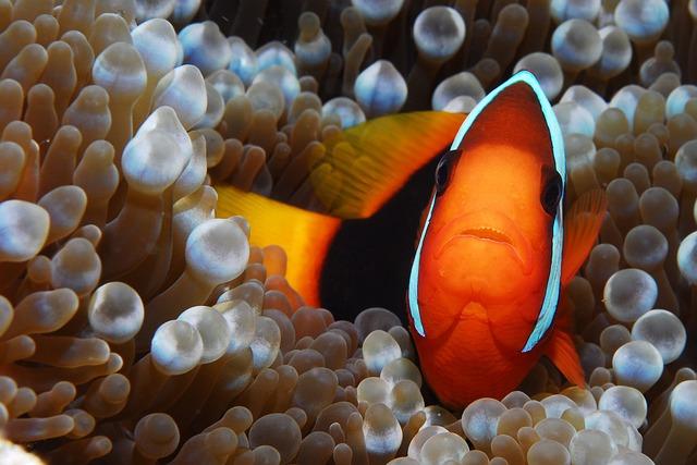 Fish, Clown, Diving, Nemo