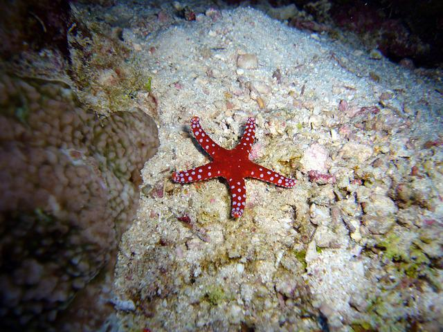 Diving, Underwater, Water, Sea, Starfish