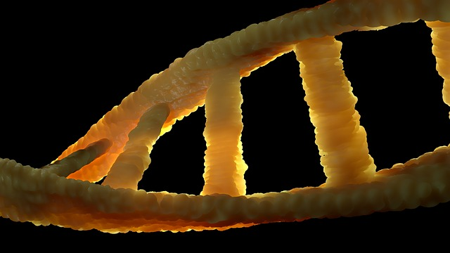 Dna, Dns, Biology, Genetic Material, Double Helix
