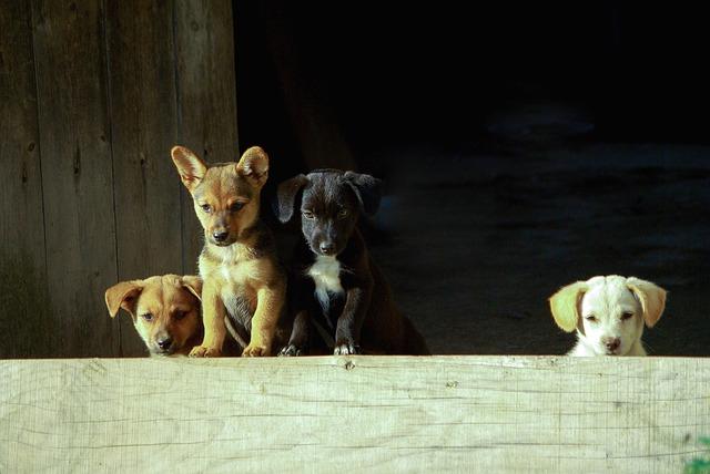 Dog, Mammals, Animal, Dog And, Pet, Puppy, Cute