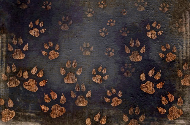Dog, Paw, Print, Pet, Cat, Walk, Cartoon, Animal