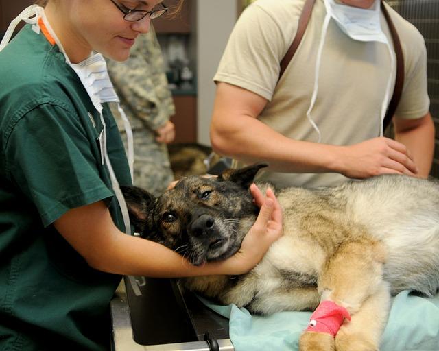 Veterinary, Clinic, Veterinarian, Dog, Patient, Animal