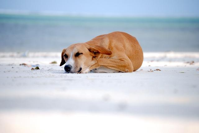 Dog, Sleeping Dog, Sleeping, Animal