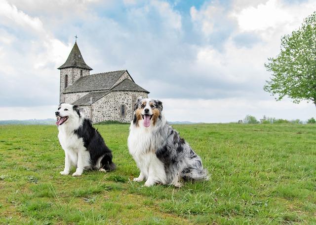 Berger, Australian, Nature, Dog, Chapel, Landscape