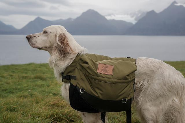 Dog, Laika, Lyngen, Back-pack, Dog Cleavage