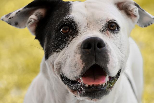 Stafford Mongrel, Dog, Black And White, Animal, Pet