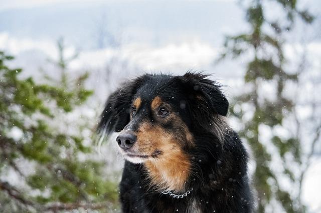 Dog, Mongrel, Pet, Black, Brown, Cute, Jyväskylä