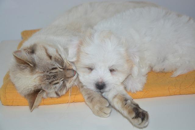 Dog, Cat, Puppy, Animals, Domestic Animal, Dog Cat