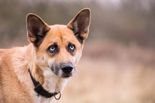 Cute, Animal, Dog, Pet