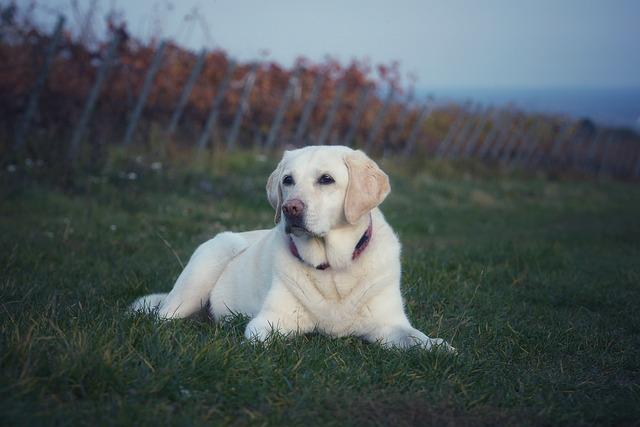 Dog, Cute, Grass, Mammal