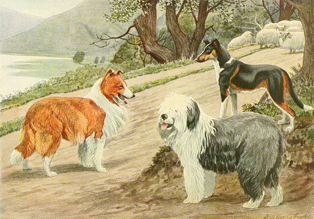 Border Collie, Dog Trio, Dog