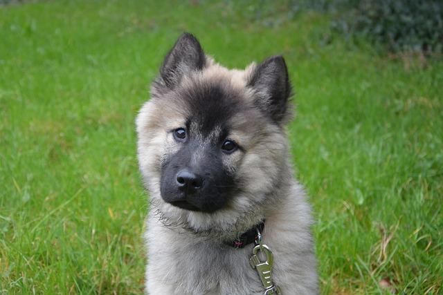 Dog, Dog Christmas Blue, Canine, Domestic Animal