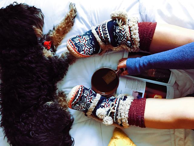 Dog, Pet, Furry, Animal, Tea, Drink, Cup, Warm, Slipper