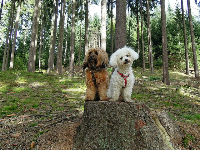 Dogs, Dog, Two, Forest, Sitting, Trees, Tree Stump