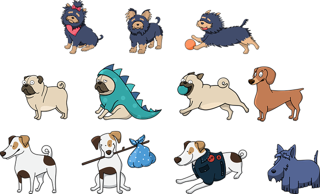 Dog, Animals, Pet, Cute, Happy, Funny, Funny Dog