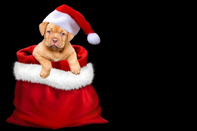 Christmas, Gifts, Dog, Christmas Dog, Santa Hat, Cap