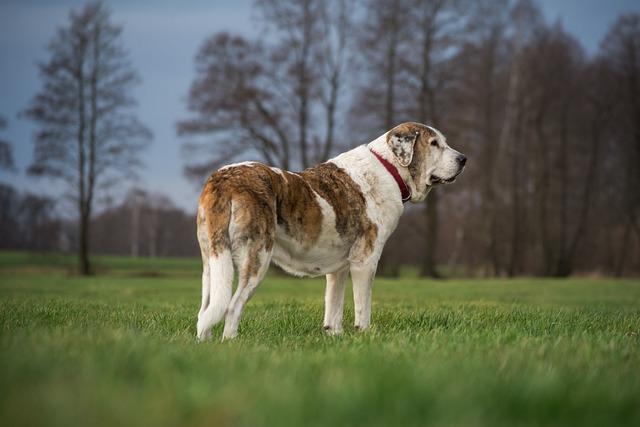 Dog, Grass, Nature, Meadow, Field, Mammal, Mastin