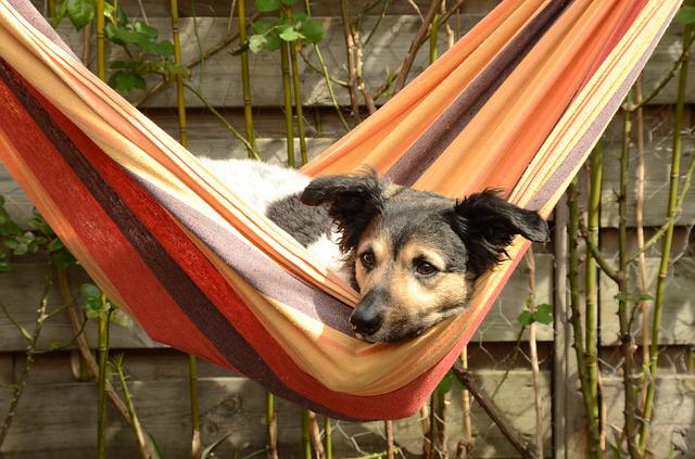 Dog, Stabij, Frieze, Pet, Hammock