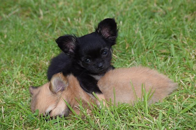 Cute, Grass, Mammal, Animal, Little, Dog, Puppy