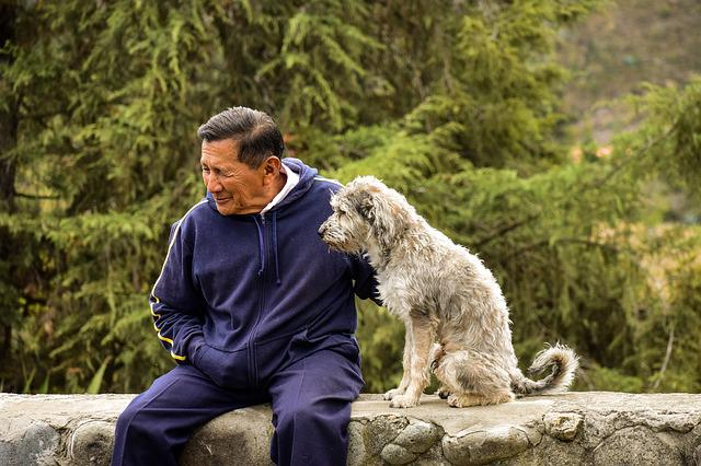 Older, Dog, Old Man With His Dog, Pet With Its Master
