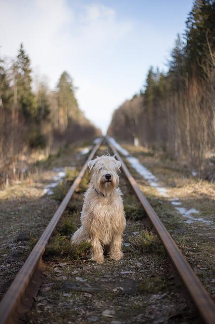 Dog, Nature, Outdoors, Wood, Travel, Grass, Railroad