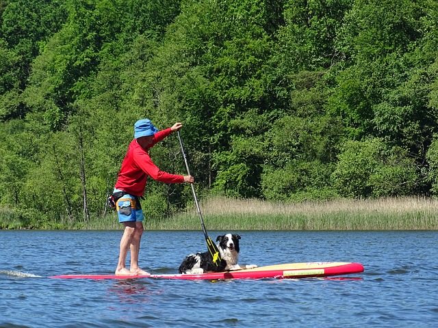 Paddle, Rowing, Stand Paddle, Lake, Water Sports, Dog