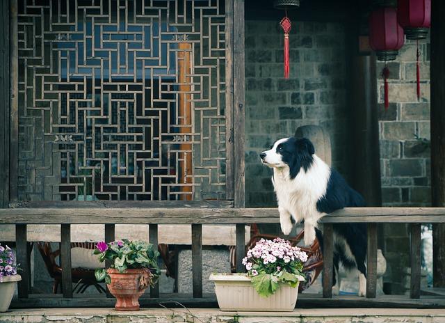 Flower, Pavilion, Dog