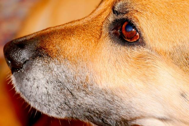 Dog Snout, Dog, Snout, Pet, Animal, Hybrid, Cute, Head