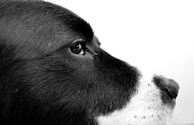 Dog, Photography, Black, Pet