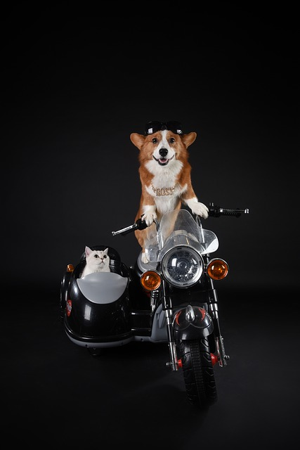 Pets, Dog