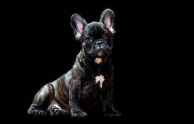 Dog, Bulldog, Smart Look, Pets, Man's Best Friend