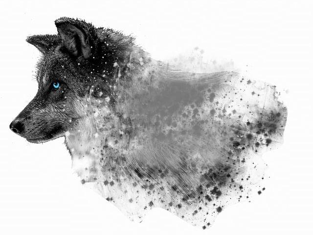 Dog, Canine, Desktop, Animal, Wolf, Photoshop