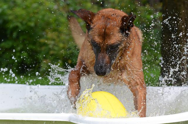 Dog Pool, Dog Swimming Pool, Malinois, Crazy Egg