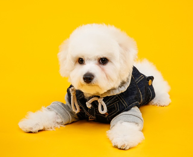 Dog, Puppy, Cute, Dog And