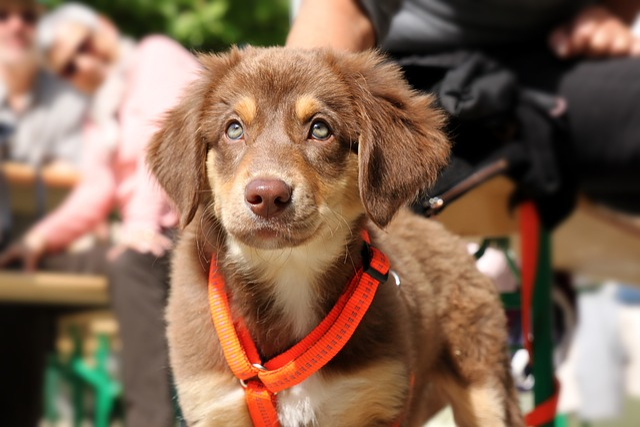 Dog, Puppy, Snout, Husky, Fur, Hybrid, Animal, Head