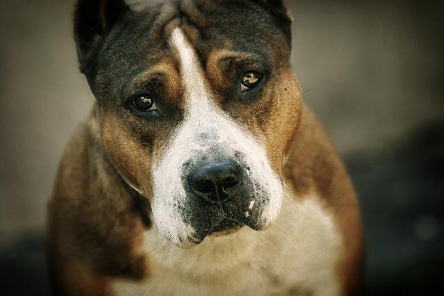 Staff, Each, Dog, Portrait, Eyes, Animals