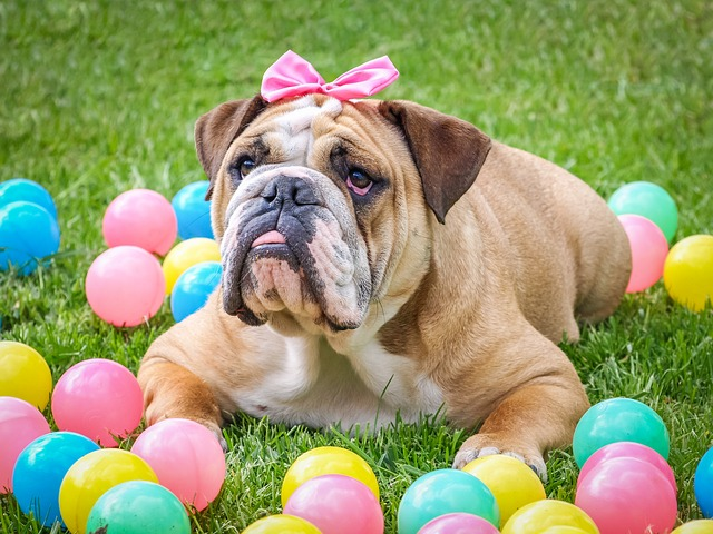 Bulldog, Cute, Easter, Animal, Dog, Pet, Sweet
