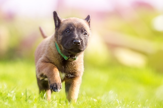 Puppy, Sweet, Dog, Cute, Summer, Young Animal, Pet