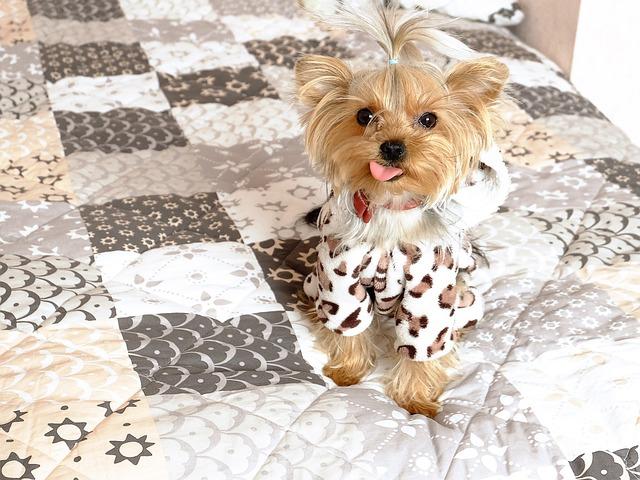 Dog, The Language, Smile, Pets, Small Dog