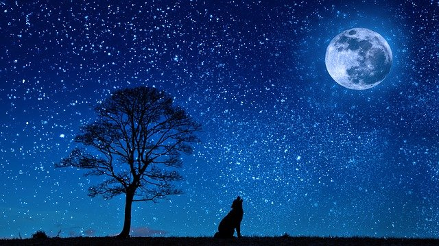 Dog, Wolf, Yelp, Moon, Tree, Night, Starry Sky